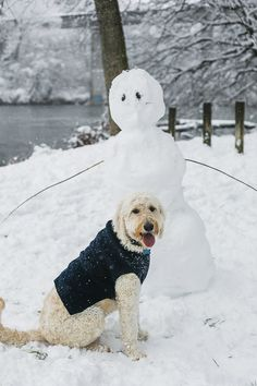 Goldendoodle wearing coat and snowman friend, big snow, NC dog photograph, ©️Casey Hendrickson photography