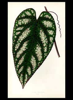 Botanical Prints from Studio Botanika would make a perfect printie. PHM