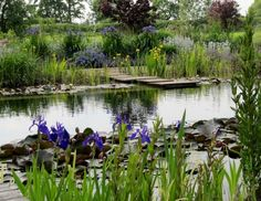 Water World: A Natural Swimming Pool Lily Pads Included