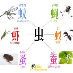 bugs insects mandarin chong4