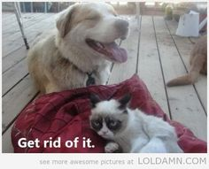 Grumpy cat gets a friend…