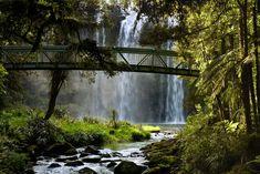 Whangarei Falls - Neuseeland - Nordinsel von Joerg Krause