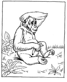 Chimpanzee coloring pages - These free printable animal coloring pages of zoo animals are fun for kids. Zoo Animal Coloring Pages, Monkey Coloring Pages, Easy Coloring Pages, Coloring Pages To Print, Coloring Sheets, Coloring Books, Colouring, Printable Christmas Coloring Pages, Free Printable Coloring Pages