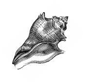 Seashell or Stone Ceremony wording