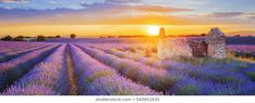 Escape Mondays: Lavender fields as far as the eye can see gives you the classic postcard view in Provence, France Aix En Provence, Provence France, Citation Nature, Chamonix Mont Blanc, Best Cruise, Lavender Fields, Lavender Flowers, Best Hikes, Medieval Town