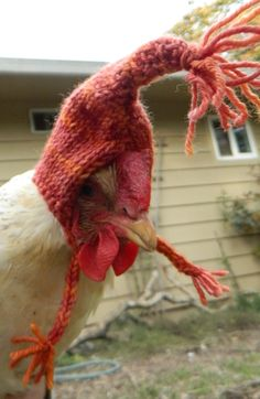 neohippiewoman:    I have nothing to say for myself.  You may think, 'waste of time' and I think, 'my life is more magical when my chickens wear gnome bonnets'.  Besides, Marilyn the chicken deserved a little whimsy in her wardrobe.