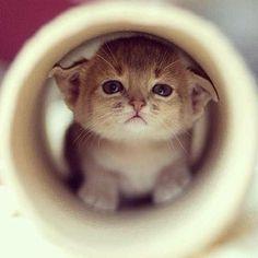 Cosa linda! #gatos #gatito #kitten