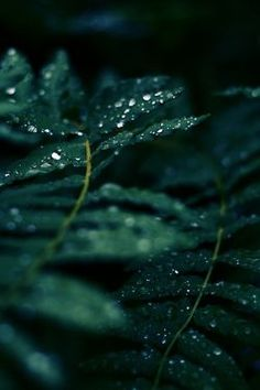 60 Ideas Nature Aesthetic Green Forest For 2019 Dark Green Aesthetic, Nature Aesthetic, Aesthetic Gif, Aesthetic Collage, Terra Verde, Foto Macro, Slytherin Aesthetic, Shades Of Green, Color Inspiration