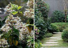 CHEIRO DE FLOR  Ao simples sopro de uma brisa, elas se revelam. As flores perfumadas brotam em arbustos e trepadeiras e provam que, mesmo minúsculas, têm efeito prolongado. Quatro paisagistas apresentam formas de incorporá-las nos jardins