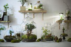 Pour tous les citadins amoureux de la nature, nous avons trouvé LA solution pour faire du jardinage directement dans votre appart : Le jardin en bocal !