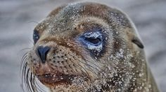 I Photographed Sea Lions In The Galápagos, And There's A Reason People Call Them The Puppies Of The Sea