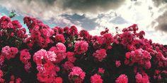 Image via We Heart It https://weheartit.com/entry/80600179/via/13802995 #beautiful #fashion #flowers #nice #photo #pretty #quote