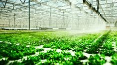The Internet Of Things Meets Hydroponics: How To Grow A Better Vegetable