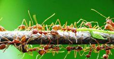 #HeyUnik  MASYAALAH... Ilmuwan Berhasil Membuktikan Semut Berbicara Seperti Dalam Alquran #Link #YangUnikEmangAsyik