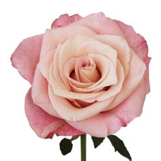 FiftyFlowers.com - Blushing Ombre Garden Rose