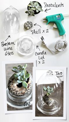 1. Plant 2 small succulents in the opening of a large shell.    2. A Yankee Candle jar lid works as the base (cut off the plastic stopper).    3. To nestle your tiny living sculpture in the lid, flip it to the flat side and put a generous amount of hot glue in the center. Sit the shell on top and hold steady until it sets.