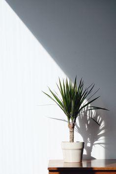 Plant life | Anton Rodriguez