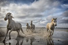 """""""Capturing Action """" Story and Pictures -- National Geographic Your Shot"""