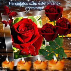 Osztva Dan, Album, Flowers, Plants, Love, Plant, Royal Icing Flowers, Flower, Florals