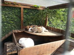Tipps fürs Außengehege gesucht! :) - Kaninchen - Forum by sweetrabbits - made with Forum101 by worldweb Rabbit Hutch And Run, Rabbit Run, Rabbit Hutches, Pet Rabbit, Bunny Cages, Rabbit Cages, Rabbit Life, House Rabbit, Funny Bunnies
