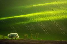 Spring Tree by Marcin Sobas