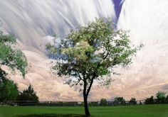 Farewell Tree - Timestack - TGBurnett Photography