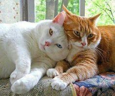 Lovely cats #Cat#Kittens#CityGirl#MaineCoon