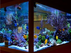 A beautifully decorated aquarium.