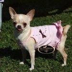 http://altamodaeuropeacanina.com/es/vestidos/536-vestido-rosa-de-volantes-con-pedreria-arco-iris.html