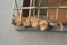 Un Chat qui dort sur des grilles de balcon !