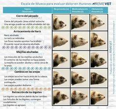 Dogs, Animals, Ferrets, Animales, Animaux, Pet Dogs, Doggies, Animal, Animais