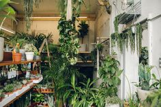 Conservatory Archives : London — Haarkon - Photography, Art Direction, Life, Places to Visit, Greenhouse Tour and Interiors.