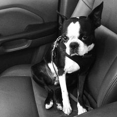You made me wake up and get in the car. Better turn on the seat warmer.