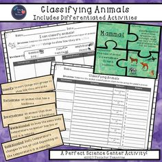 Students will love this hands-on activity for classifying animals! This product includes 6 puzzle sets for mammals, birds, fish, reptiles, amphibians, and insects. Each puzzle set includes the classification, definition, characteristic (vertebrate or invertebrate), and examples (picture and name of animal included).
