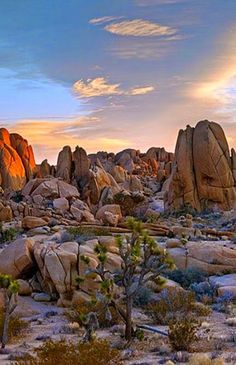nice Joshua Tree National Park, California