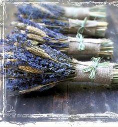 Lavender by fifi luis