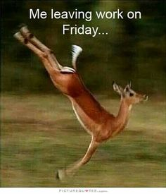 In my case today is my #friday can't wait for some more #familytime #family #workout #getfit #getinshape #strenghttraining  my #kids can't wait for them to get off school, so PEOPLE #staystrong your almost there!!! #keepmovingforward #nevergiveup #follow your #dreams #followme #networking #instamood #instagood #instadaily #fitness #instagramers #marketing #socialmedia #business #businessowner always #focus on your #dreams #life is #beautiful #lifeisgood to all my #businessman keep on going!