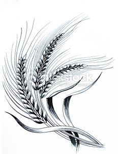Drawing Of Ripe Wheat Bunch Stock Illustration | Thinkstock