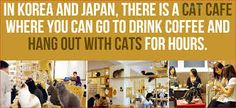 Image result for japan facts