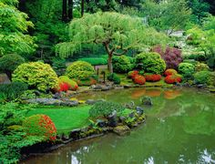 It's all about the pruning in a Japanese garden. The loose weeping of the tree makes a perfect contrast with the tightly-hedged blooming Azaleas.