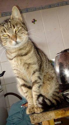 Name: Stefánia (6 kg schwer!)