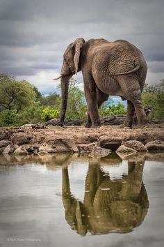 Elephant Reflection in Botswana