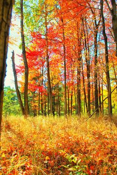 ✯ A gorgeous lush section of color at Letchworth State Park, New York Letchworth State Park, Scenic Photography, Autumn Photography, New York State Parks, Ny Parks, Autumn Scenes, Valley Of Fire, Colorful Trees, All Nature