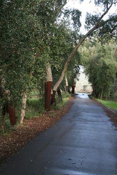 Kurkbomen bij Espargal in Algarve Portugal