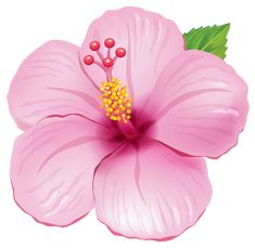Pink Exotic Flower PNG Clipart Picture