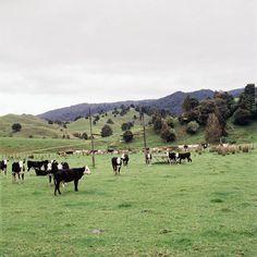 Mountains, Nature, Photography, Travel, Animals, Naturaleza, Photograph, Viajes, Animales