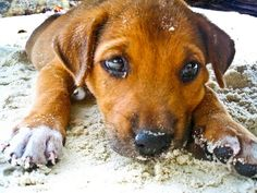 Get rid of all the fleas using this simple natural dog medicine for fleas, your dog will be livelier, try it!