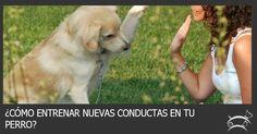 Aprende aquí el secreto que te ayudará a entrenar nuevas conductas en tu perro. Ingresa Aquí >>> http://sobreperrosygatos.com/entrenar-nuevas-conductas-perro/