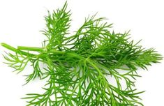 The health benefits of Dill Essential Oil can be attributed to its properties like anti spasmodic, carminative, digestive, disinfectant, Galactogogue, sedative, stomachic and Sudorific.