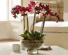 Glowing reds and smoky purples make this orchid centrepiece something special